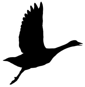 VMNH_goose_silhouette_showing_skeleton
